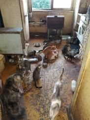 Život s kočkami