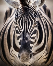Animals #13