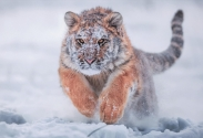 Animals #14