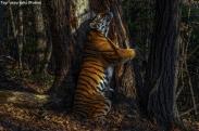 Animals #15